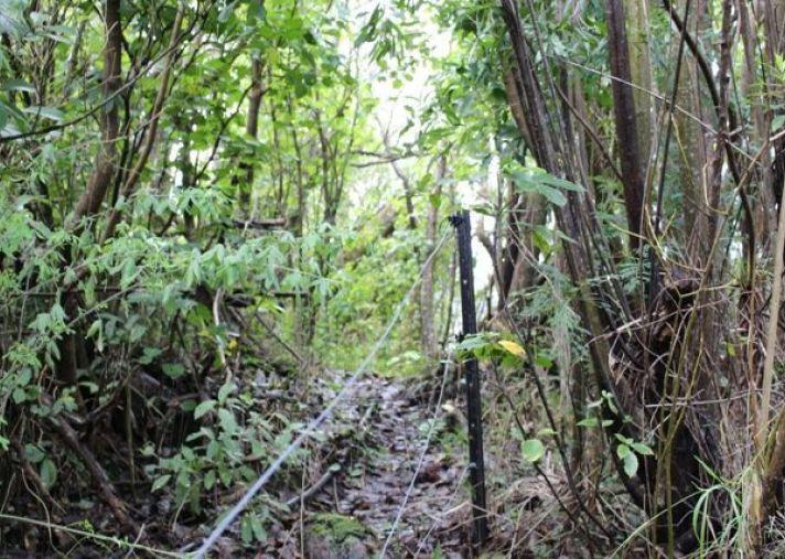 635 Whakatomotomo Road, Pirinoa