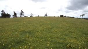 Katikati